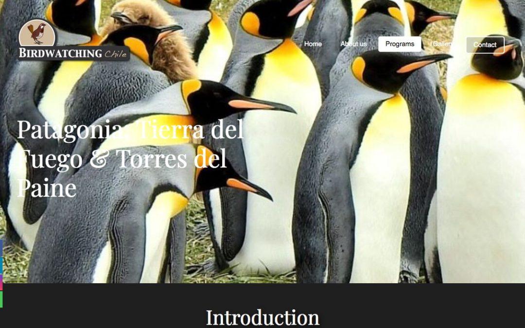 Birdwatching Chile, tour de Tierra del Fuego Birdwatching